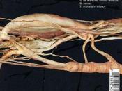 Transfer Trachea Reverberations from Point: False Omniscient
