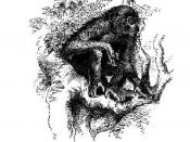 Illustraton of a Chimpanzee