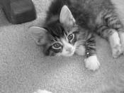 Spivey as baby kitten