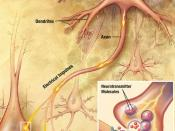 English: Drawing illustrating the process of synaptic transmission in neurons, cropped from original in an NIA brochure.