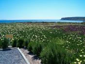 Flores y Mar (Baleo Claudia)