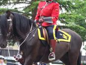A female RCMP officer riding a horse at the 2008 Calgary Stampede Parade in Calgary, Alberta, Canada.