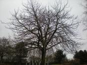 WCPS tree