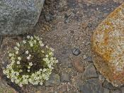 Acadia-Jun2011-304 4x6