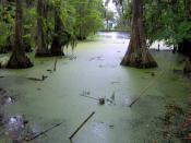 English: Swamp in the northwest, undeveloped section of Middleton Place, near Charleston, South Carolina, USA.