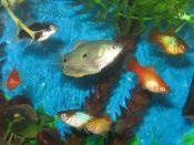 English: A Three Spot Gourami with platies