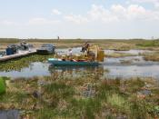 Airboat tours at the Florida Everglades