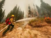 English: Lolo Pass, MT, August 18, 2003 -- A firefighter from Bridger Fire Inc. out of Bozeman, Montana works on putting out spot fires that erupted on the Hopeful 2 fire near the Lolo Pass in Montana. Photo by Andrea Booher/FEMA