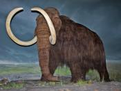 English: Woolly mammoth restoration at the Royal British Columbia Museum, Victoria, British Columbia.