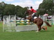 English: Showjumping horse and rider at the 2006 Mt Pleasant Show