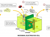 English: A schematic of a microbial electrolysis cell.