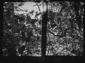 Film Experiment