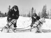 Royal Canadian Mounted Police (R.C.M.P.) These dogs are wearing H-back freight harnesses. Photo from 1957.