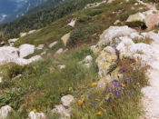 Flora typical of the Alpine Region of the Alps.