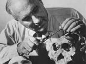 Lewis Leakey examining skulls from Olduvai Gorge, Africa
