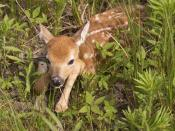 Newborn fawn. Taken at Quivira National Wildlife Refuge.