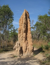 English: These termite mounds were most impressive. From the park sign: Cathedral Termite Mound This mound is home to a colony of grass eating termites, Nasutitermes triodiae. It's about 5 meters high and could be over 50 years old. Kingdom:Animalia Phylu
