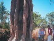 A tall termite mound in the Northern Territory