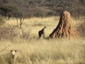 Termite mound in Namibia