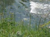 English: Sids' Weir on the River Witham in the Summer