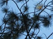 Pine needles abstract