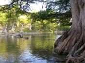 English: Baldcypress trees on the banks of the Guadalupe River in of Texas, United States.