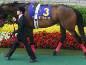 English: Red Desire (Horse) 日本語: レッドディザイア(東京競馬場)