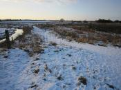 Doxey Marsh in the Snow