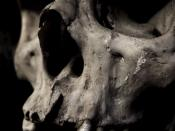 Closeup of a human skull.