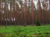 A pine forest is an example of a temperate coniferous forest