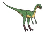 English: Compsognatus was a meateating dinosaur, the size of a hen. It lived in Germany during the late jurassic.