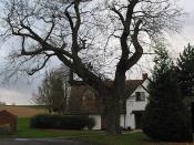 English: Winter oak by Veldt House