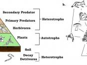 English: A trophic pyramid (a) and ecological food-web (b).