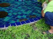 Turtles-Jimin