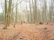 English: Hardwood Trees Hardwood trees an edge of forest near to Croxton Norfolk.