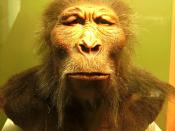 scientiffic reconstruction of a Paranthropus boisei