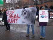 Stop seal hunt / Stop the seal slaughter