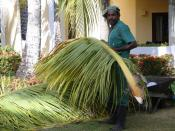 English: A Dominican Republic resort garden worker.