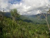 The Venezuelan Coastal Range, of the northern Andes.