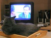 Bartleby watches The Office