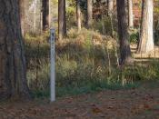English: A peace pole in Spokane's Finch Arboretum