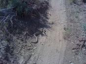 Rattlesnake 002