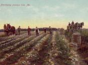 Potato harvesting in 1909