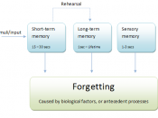 ''Note that in this diagram, sensory memory is detached from either form of memory, and represents its development from short term and long term memory, due to its storage being used primarily on a