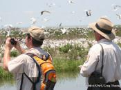 Biologists at work on Breton Island NWR