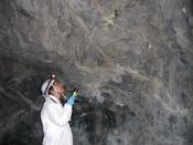 USFWS Biologist studying bat