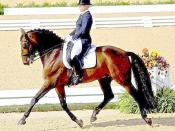 Edited photograph of a horseback rider using English style riding and tack in a dressage competition qualification