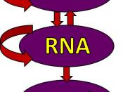 Illustration of the central dogma of biology: information transfer between DNA, RNA, and protein