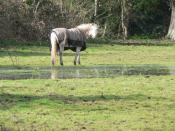 English: Throop: horse without a sense of smell Well, I assume that is the case, given its proximity to 734990.