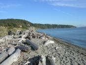 Looking roughly southeast from West Point along the south beach of Discovery Park, Seattle, Washington, USA. Beyond the beach are sand cliffs of the park itself, then houses further south on Magnolia. The body of water is the northwest corner of Elliott B